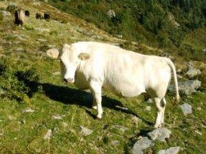 Agricoltura E Zootecnia Biologica Sistemi Produttivi Alternativi Punti Di Forza E Criticita